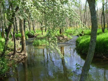Primavera en la márgenes del río Castrón (Zamora)